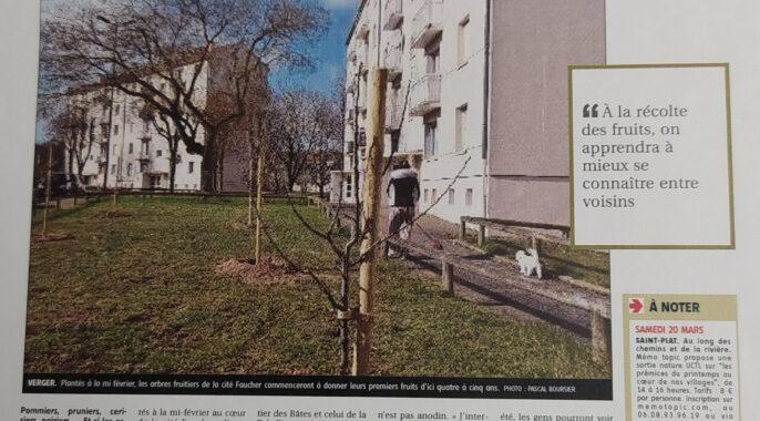 Plantations d'arbres fruitiers quartier Dunant